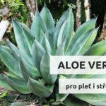 Aloe vera pro pleť i střeva